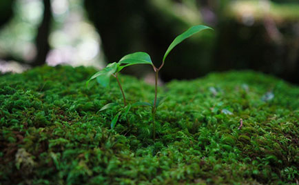 公共緑地の維持管理