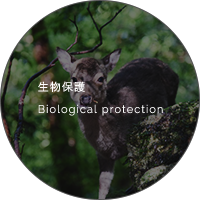 生物保護 Biological protection