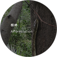 植林 Afforestation